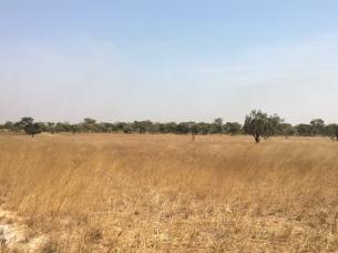 prairie before the burn off